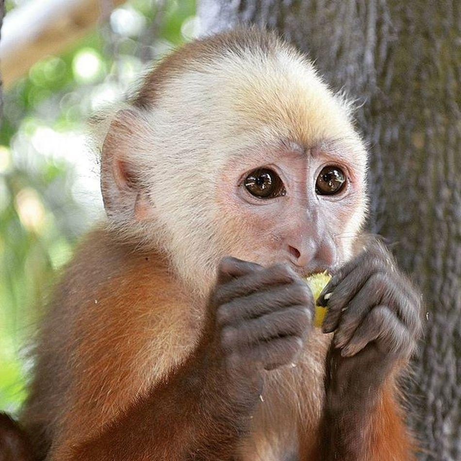 Ig_santanderes GaleriaCO Ig_nature Ig_naturelovers Love_southamerica Animals Ig_animals Igworldclub_nature Colombia_greatshots