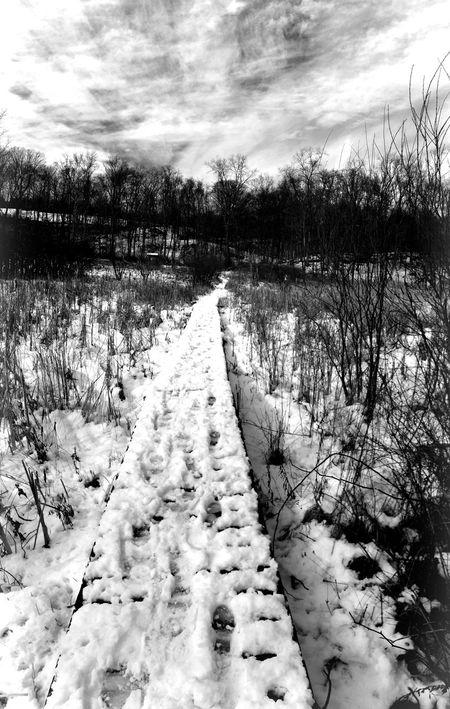 Audubon Snow Wetlands Trail Blackandwhite Nature