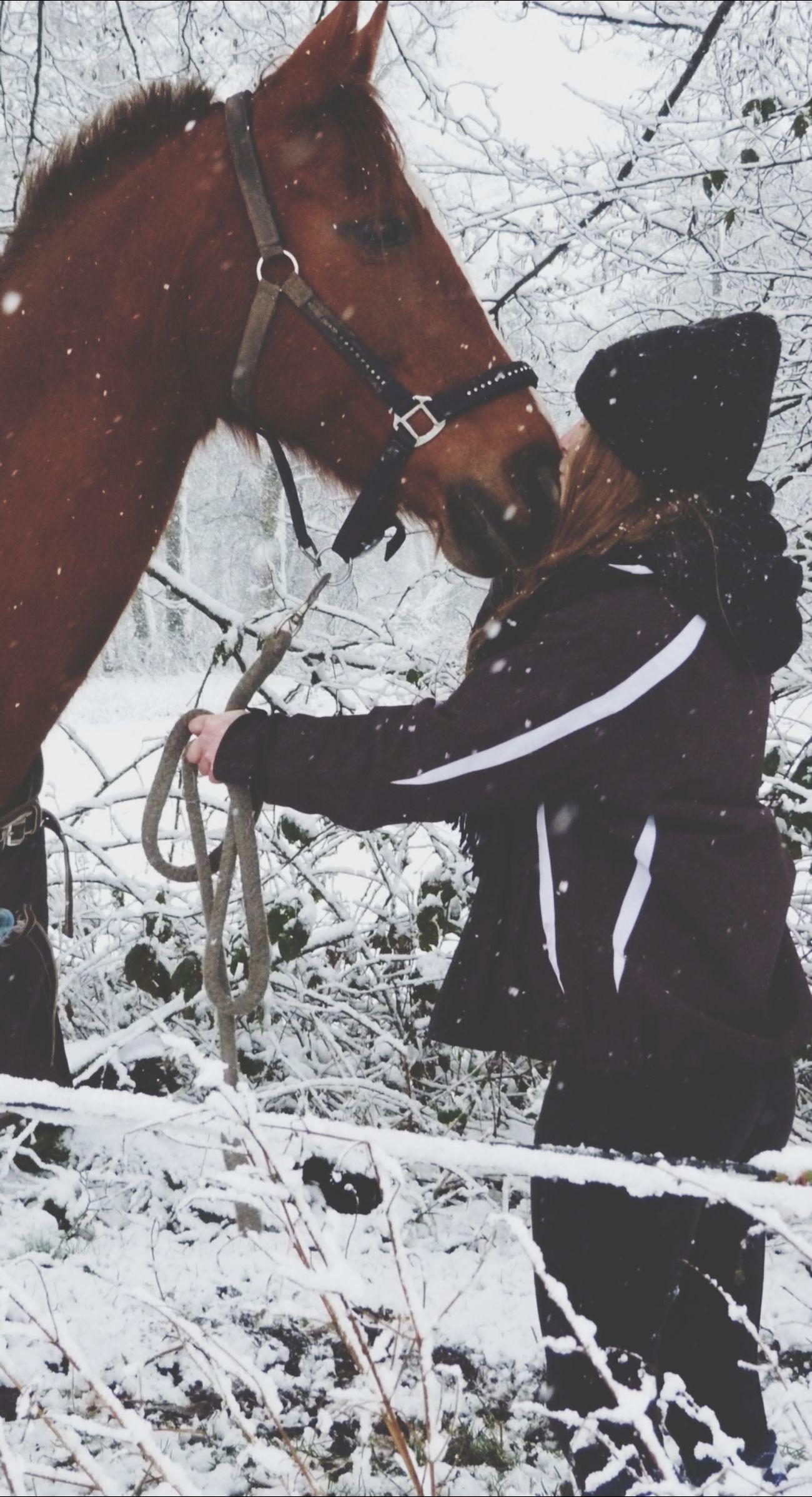 Mylove BEB Horse Snowkiss