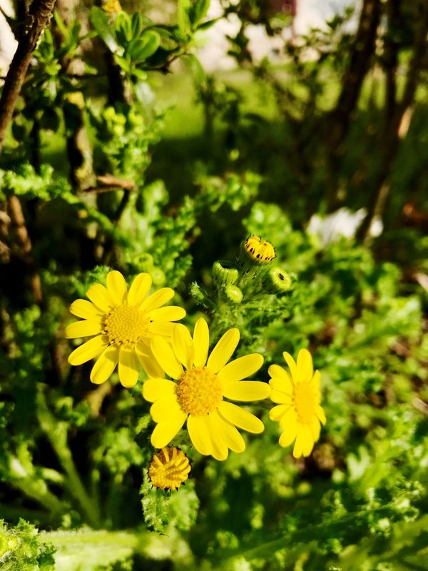 Flower Yellow Beauty In Nature Nature Growth Freshness Plant Blooming Spring Close-up Petal Fragility Day Flower Head First Eyeem Photo
