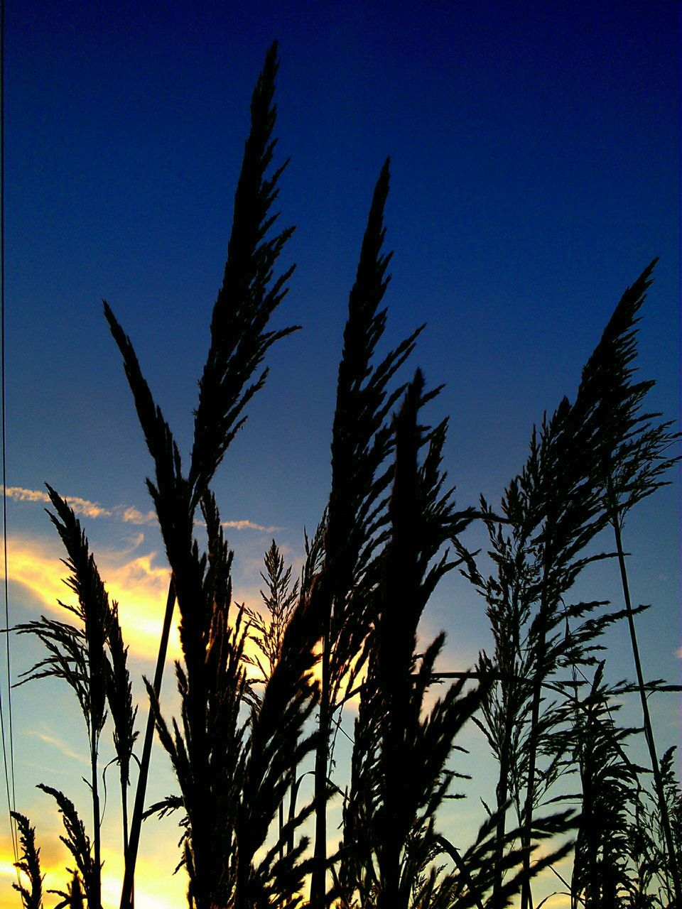 Low Angle View Of Silhouette Grasses Against Sky
