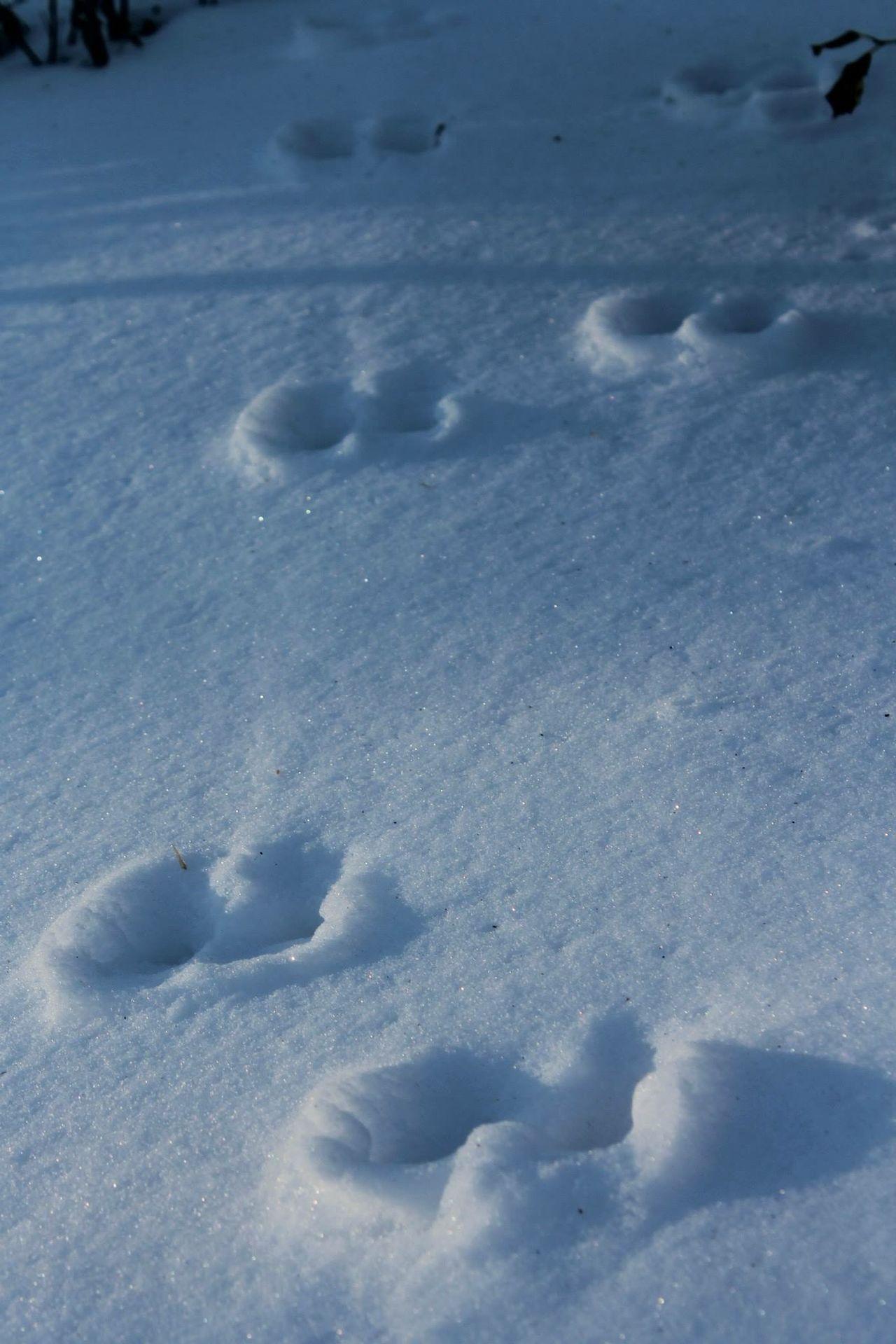 Snow Snow ❄ Snowing Animal Tracks Rabbit Tracks Footprints Footprints In The Snow