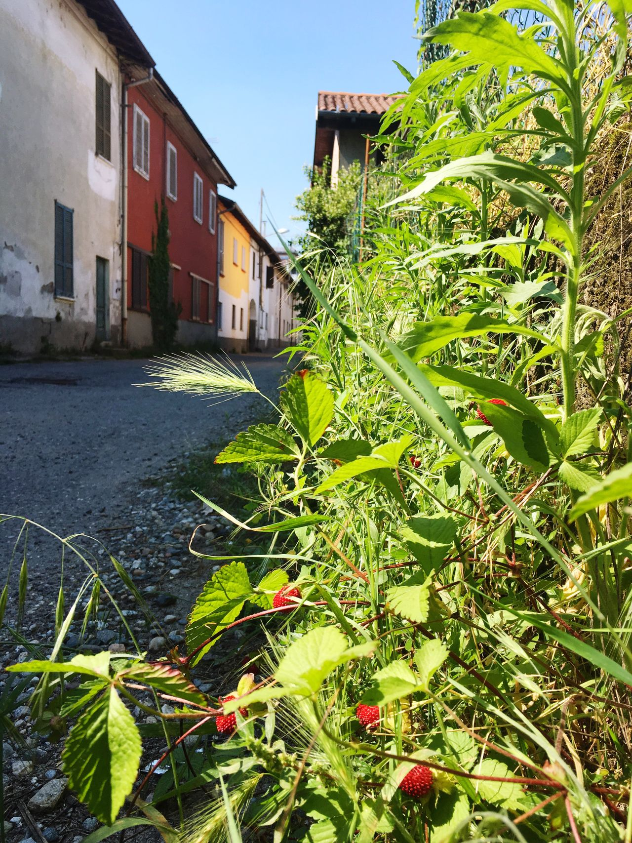 Sunny Day Siesta Sunny Italy Bella Italia Road Strawberry