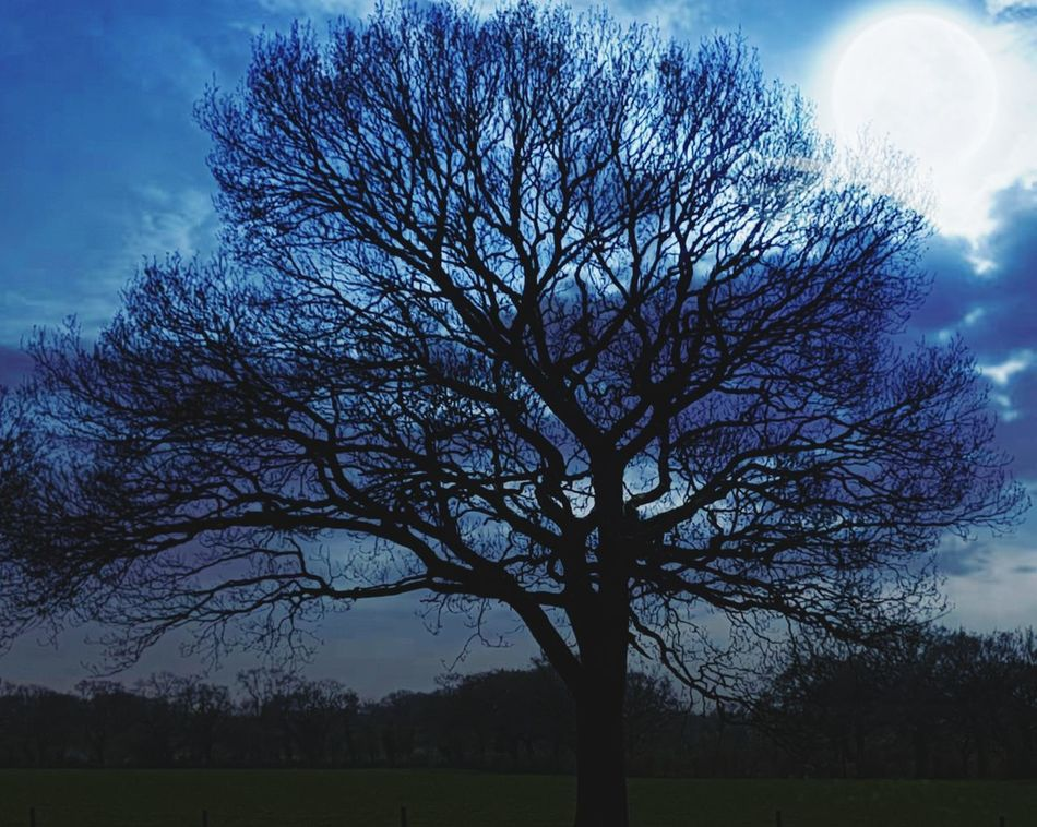 Full Moon Moon Tree Bare Tree Field Blue Sky Nature Grass Landscape Sky Branch Outdoors Beauty In Nature No People Tranquility Cloud - Sky Low Angle View Beauty In Nature Moonlight Through The Trees Dusky Sky Beautiful View Beautiful Tree