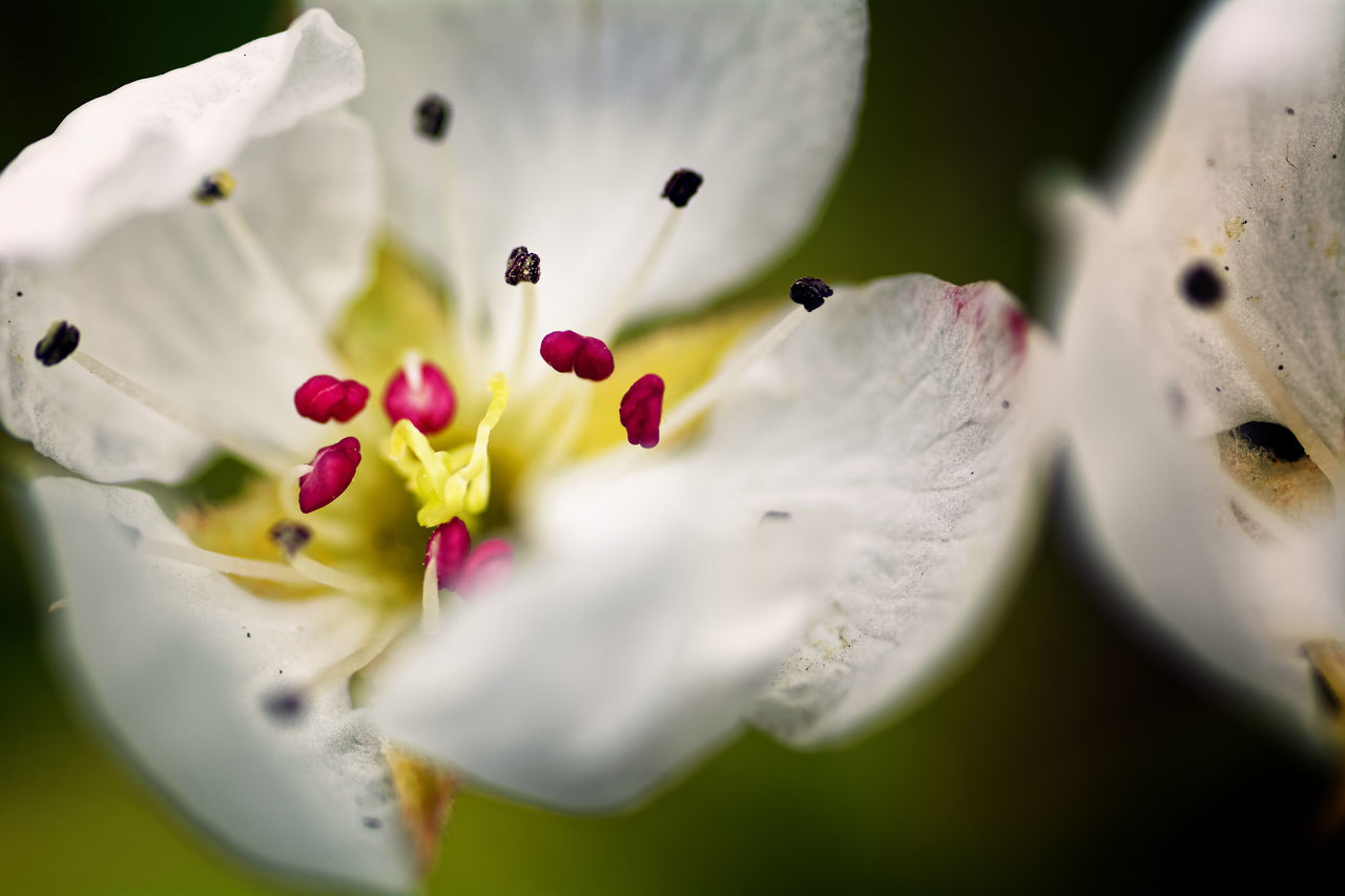 Focus On The Heart Of The Matter Beauty In Nature Close-up Day Flower Flower Head Fragility Freshness Growth Nature No People Outdoors Petal Selective Focus Springtime White Color