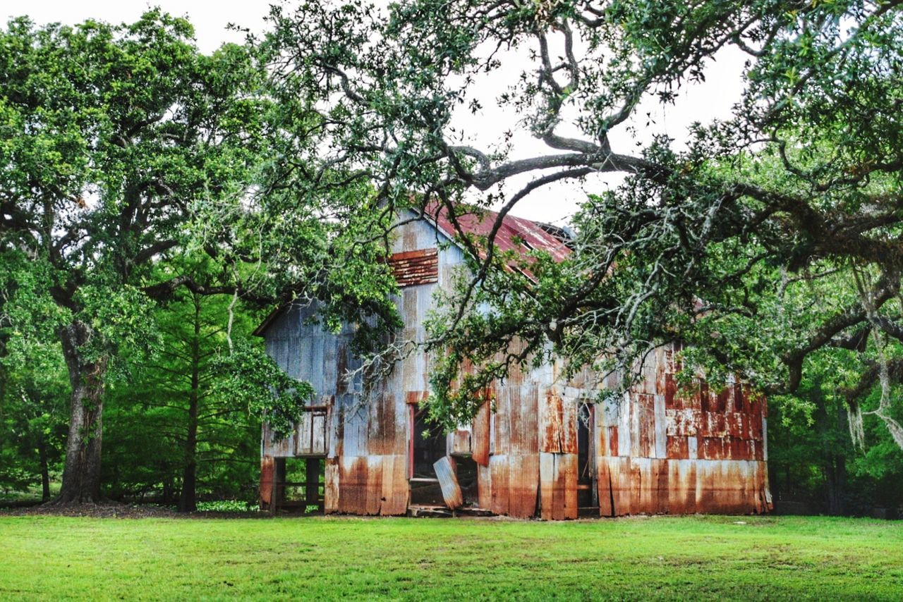 Old pump house Green Color Tree Grass Growth Outdoors No People Day Plant Nature Branch Architecture Beauty In Nature Sky Copy Space Rusty Goodness Built Structure Neglected Building Daytripping Rural Scene South Louisiana Metal Full Frame Rust Building Exterior Oak Tree