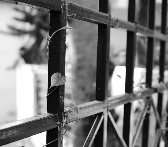 Entwined Entangled Love EyeEm EyeEm Nature Lover EyeEm Best Shots - Black + White Monochrome OpenEdit Leica D-lux Typ109 Nature On Your Doorstep in my garden in Himachal, India