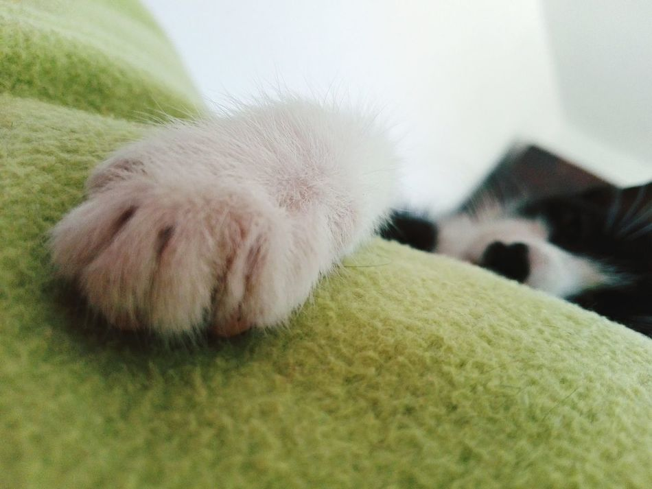 Pets One Animal Close-up Domestic Animals Wolfzuachiv Animal Body Part Showcase: 2017 @WOLFZUACHiV Eyeem Market Feline Showcase: January Edited By @wolfzuachis Huaweiphotography On Market Animal Head  Domestic Cat Lying Down Relaxation Cat Laying On Bed Kitty Kitten Paw Cat Paw Veronicaionita EyeEmNewHere