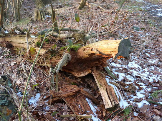 Coming and going ... :-) Barks Of A Tree Beauty In Nature Branches And Leaves Branches Of Trees Broken Heart Broken Wood Close-up Coming And Going Day Disturbed Earth Fallen Tree Forest Photography Forest Trees Forestwalk Gone But Never Forgotten Gone But Not Forgotten Hopes And Dreams Magic Moments Nature No People Outdoors Wild Nature Wildlife & Nature Wings Of Freedom Wood - Material