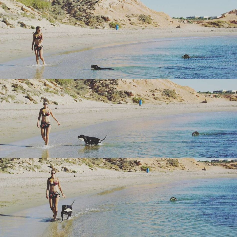 Secuencia Pitbulls Girlfriend Doggirl Surf Summer Vacations Zoology One Animal Pitbull Nature Day Water Happiness Pitbullove Canine Dogmodels Pitbullsofinstagram Pitbullsofficial Domestic Animals Beach Animal Animal Themes Tranquility Two Animals Pet Clothing Real People