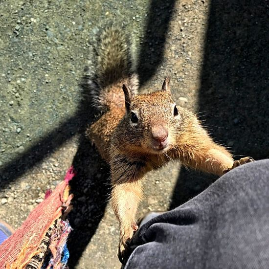EyeEm Selects One Animal Low Section Day Squirrel Holding Outdoors Animal Wildlife Animal Themes Sunlight Animals In The Wild Mammal Nature Portrait Human Body Part Close-up One Person Food Squirrel Closeup