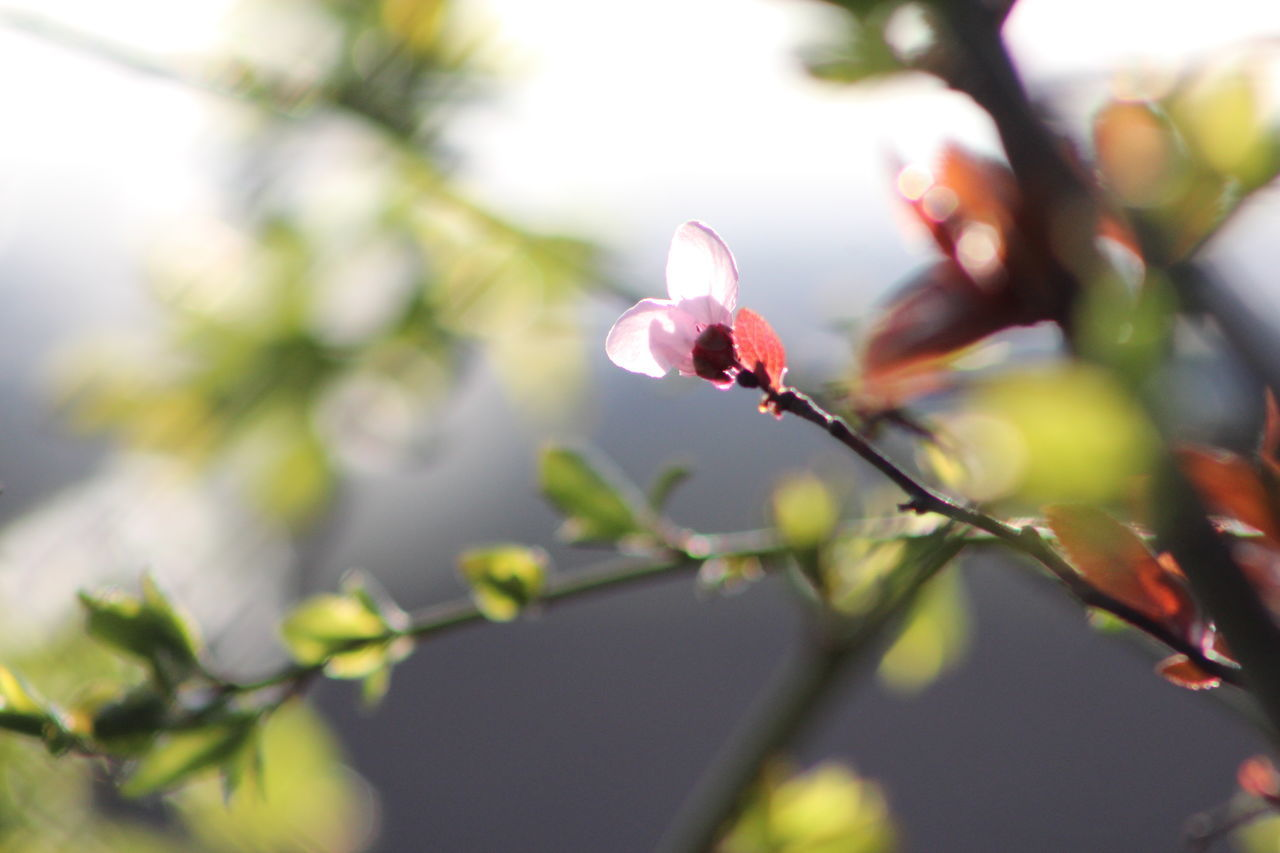 Abstract Alone Beauty In Nature Blooming Branch Close-up Day Flower Fragility Freshness Fruit Tree Nature No People Outdoors Pink Flower Plant Selective Focus Sunshine Tree