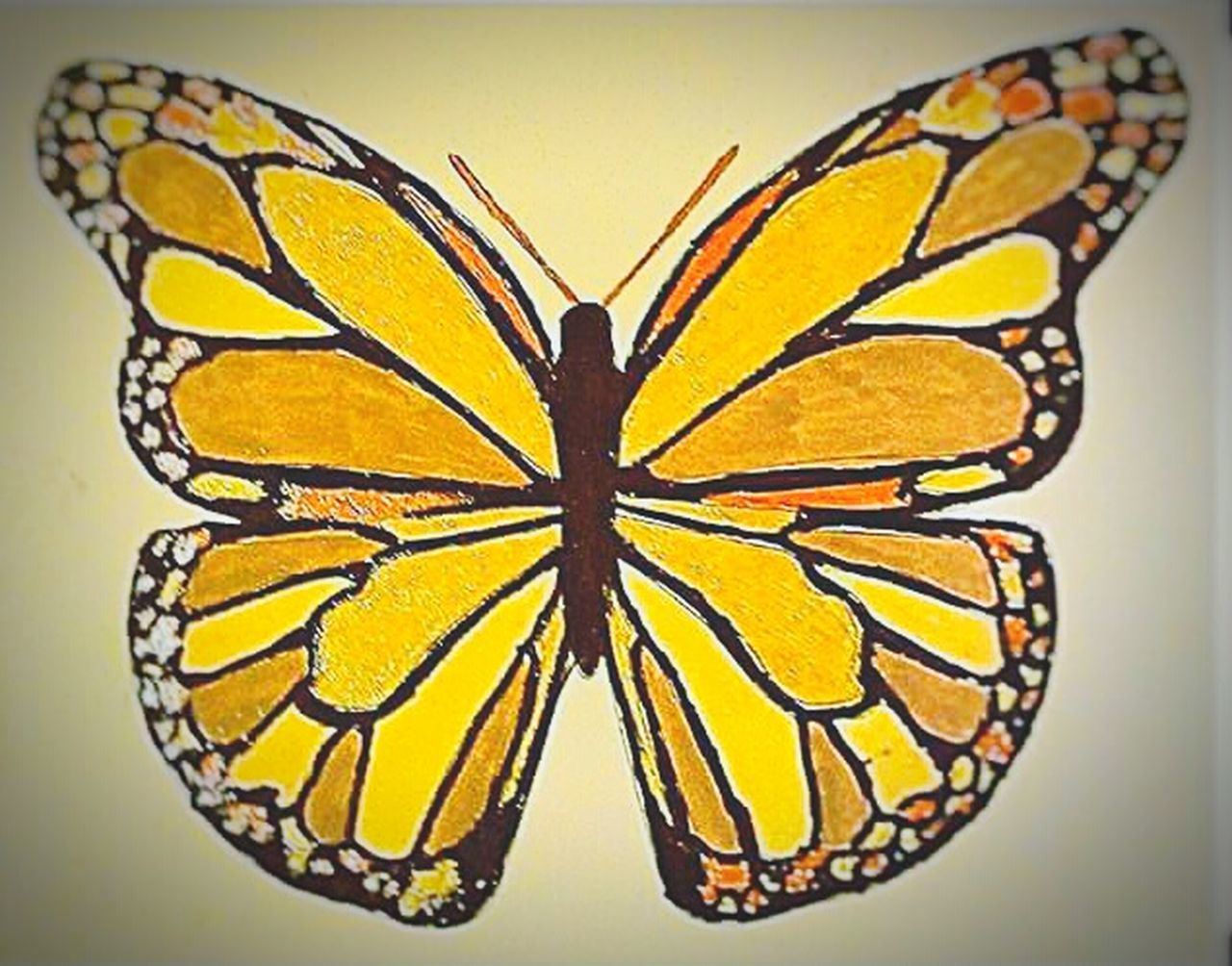 I colored this Butterfly - Insect