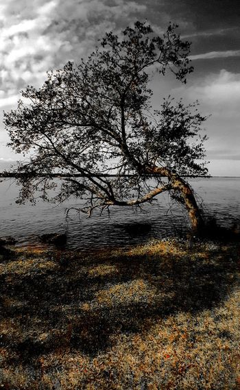PhotographybyTripp Smartphone Photography Phoneography Samsung Galaxy Note 5 Camera360Ultimate Pixlr Beastgrip Pro TreePorn Tree_collection  Treetastic Tree And Sky Lanscape Photography Landscape_Collection Light And Shadow Creative Light And Shadow Creative Photography