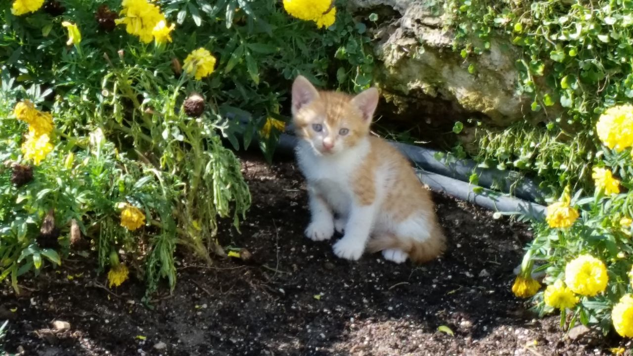 domestic cat, pets, feline, domestic animals, one animal, animal themes, mammal, cat, outdoors, plant, sitting, leaf, no people, day, nature, looking at camera, portrait, flower