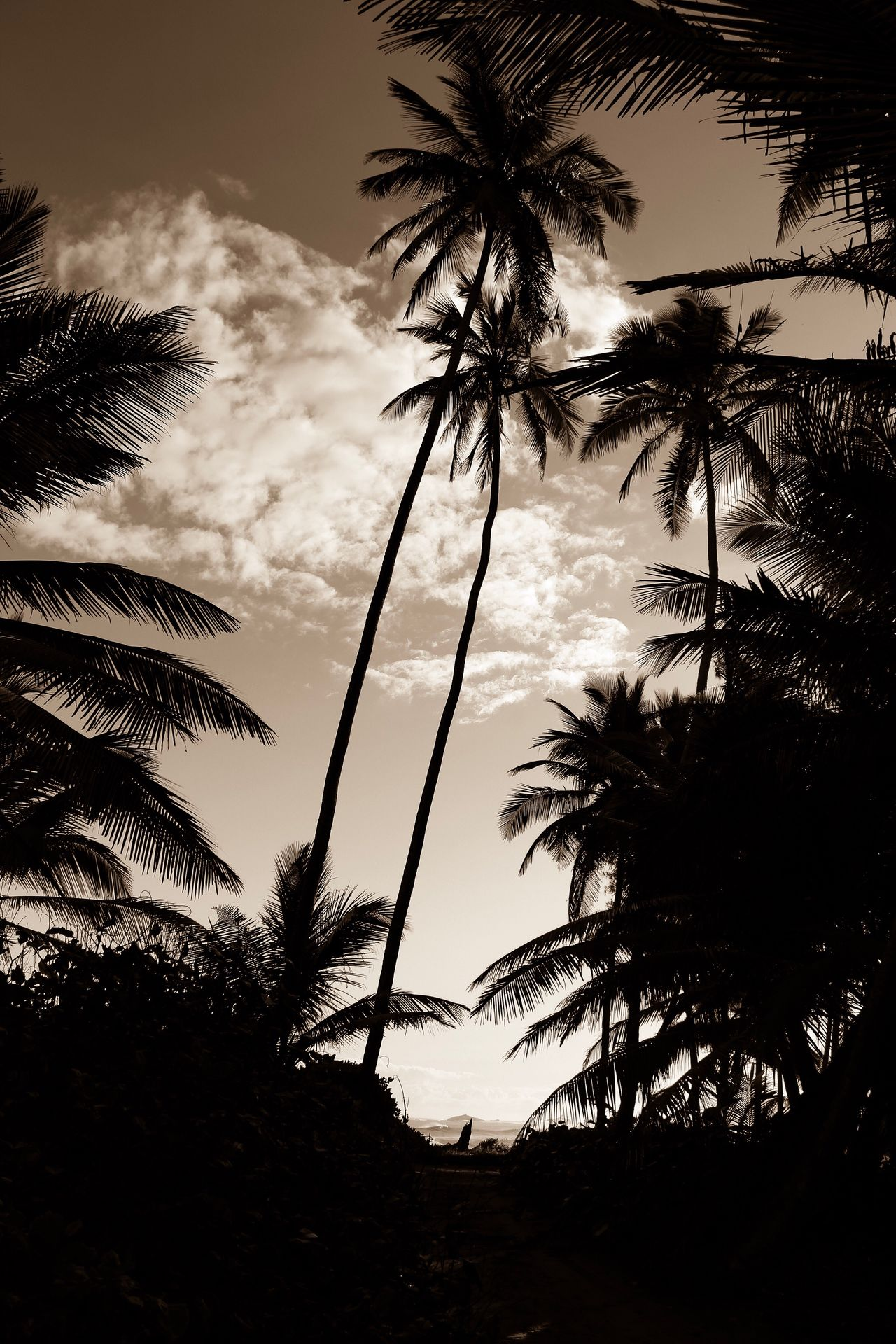 Sunset Palm Tree Silhouette Sky Nature Beauty In Nature No People Tree Scenics Cloud - Sky Outdoors Day Black And White Black And White Photography Black And White Collection  Caribbean Life Palm Tree Silhouette Low Angle View