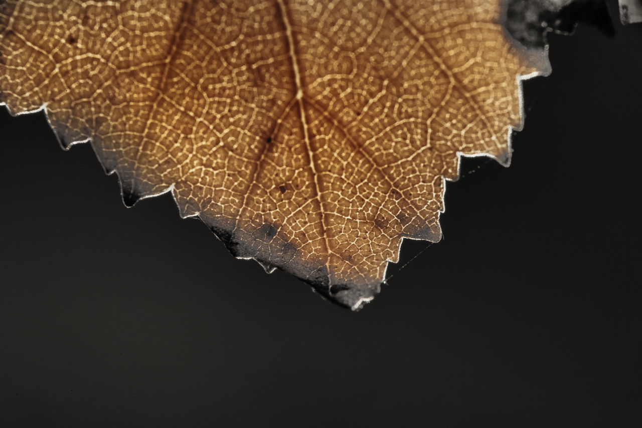 Beautiful stock photos of leaf, Achievement, Autumn, Background, Beginnings