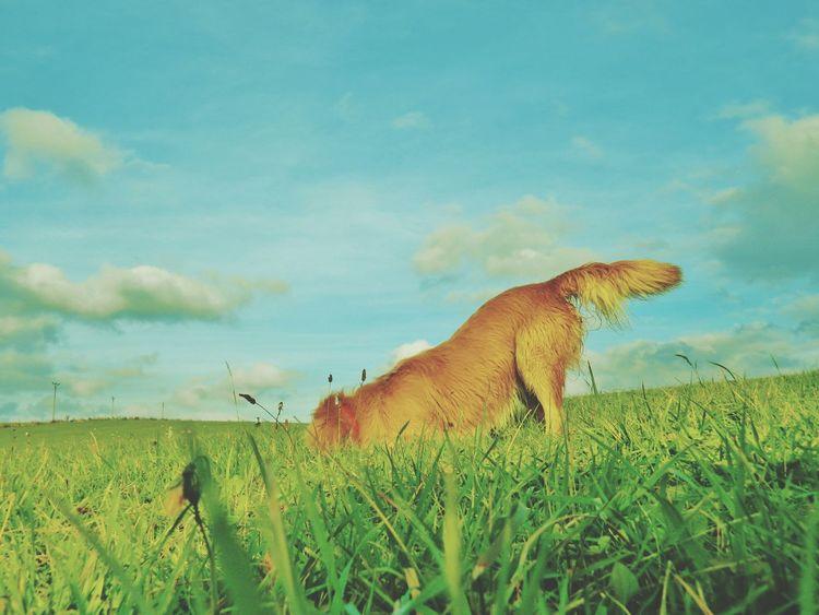 My Dog Czech Republic Walk Green Sun Looking Towards Any Mouse Crazy Crazydog Eyeemphoto