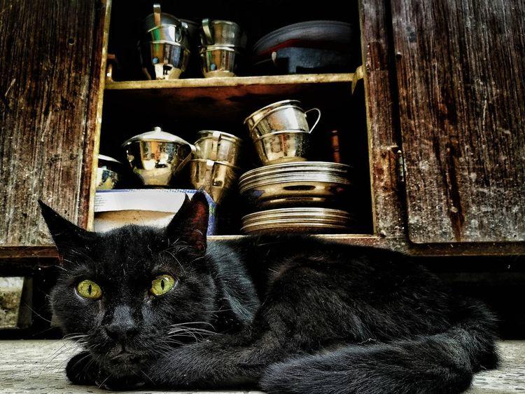 Domestic Animals Animal Themes Gato ElMushu Migatomodelo Domestic Cat Cat