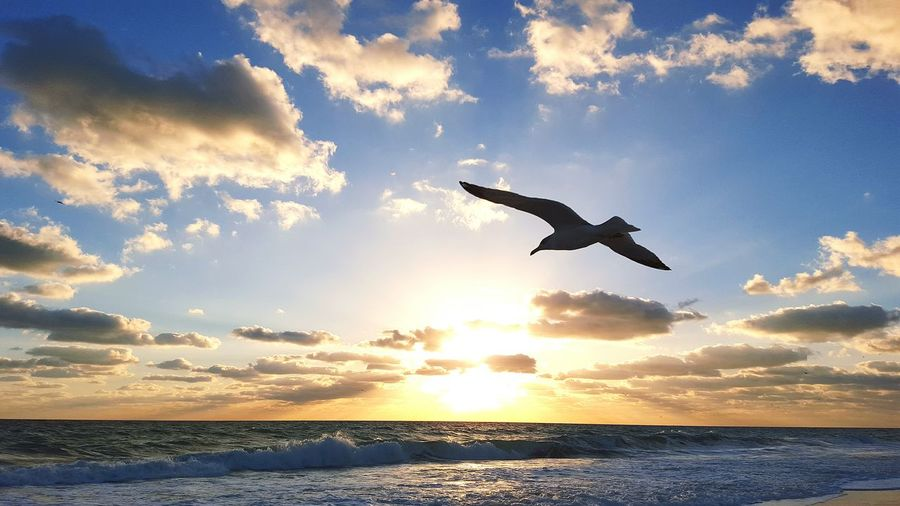 Taking Photos Enjoying Life SEAGULL IN FLIGHT Birds Flying Bird Relaxing, Photos, Live, Smile Seagull Serenity Windy Day Bird Photography Oceanlife Romantic❤ Bikini Ocean Waves, Ocean, Nature Coffee Time Softness Peaceful Evening Peaceful Relaxing Sand & Sea Surfing Bikini Time❤ Take Flight! Romance Drifting Away