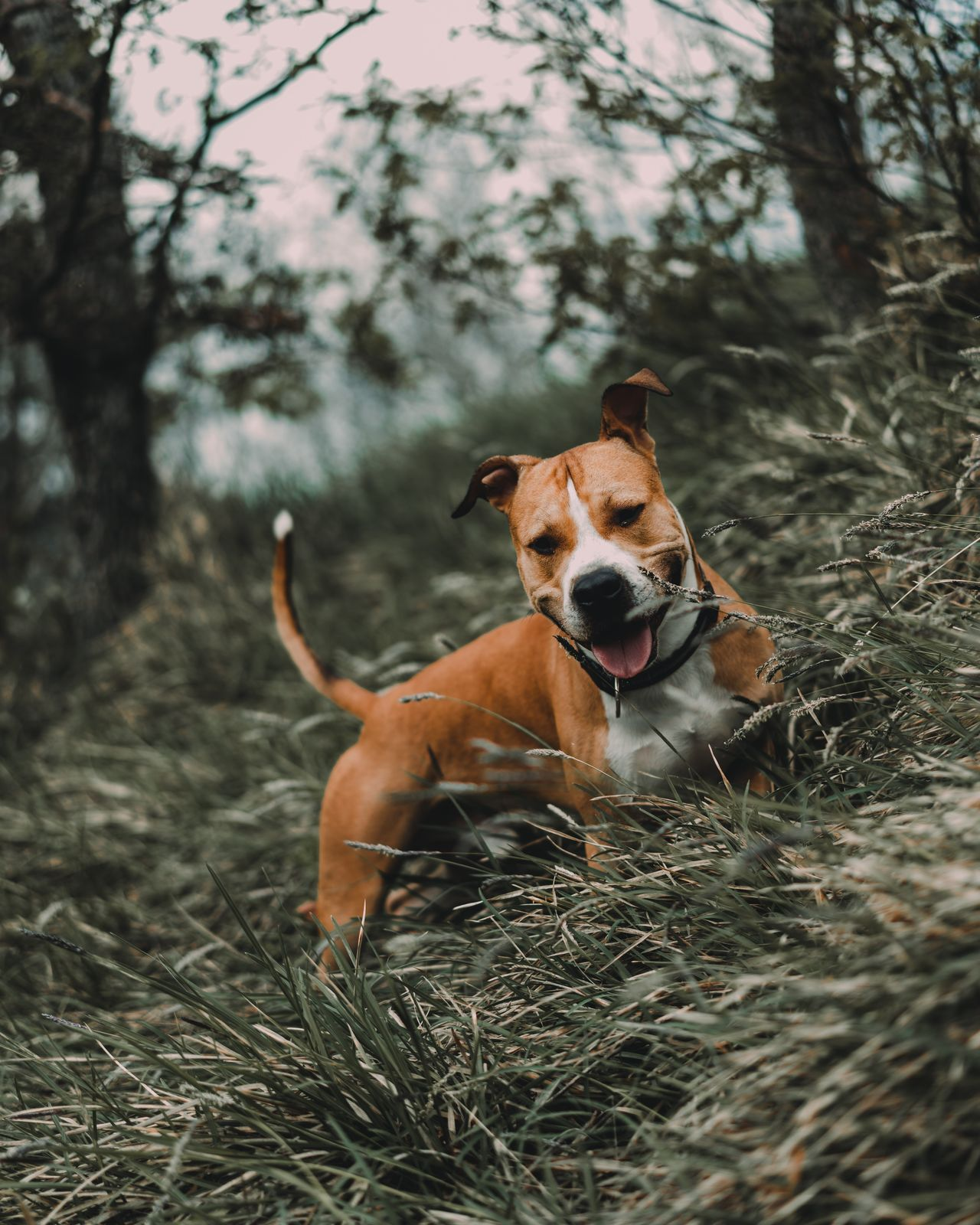 Dog One Animal Pets Outdoors No People Portrait Mammal Day Nature Water Animal Themes Domestic Animals Protruding Tree Grass