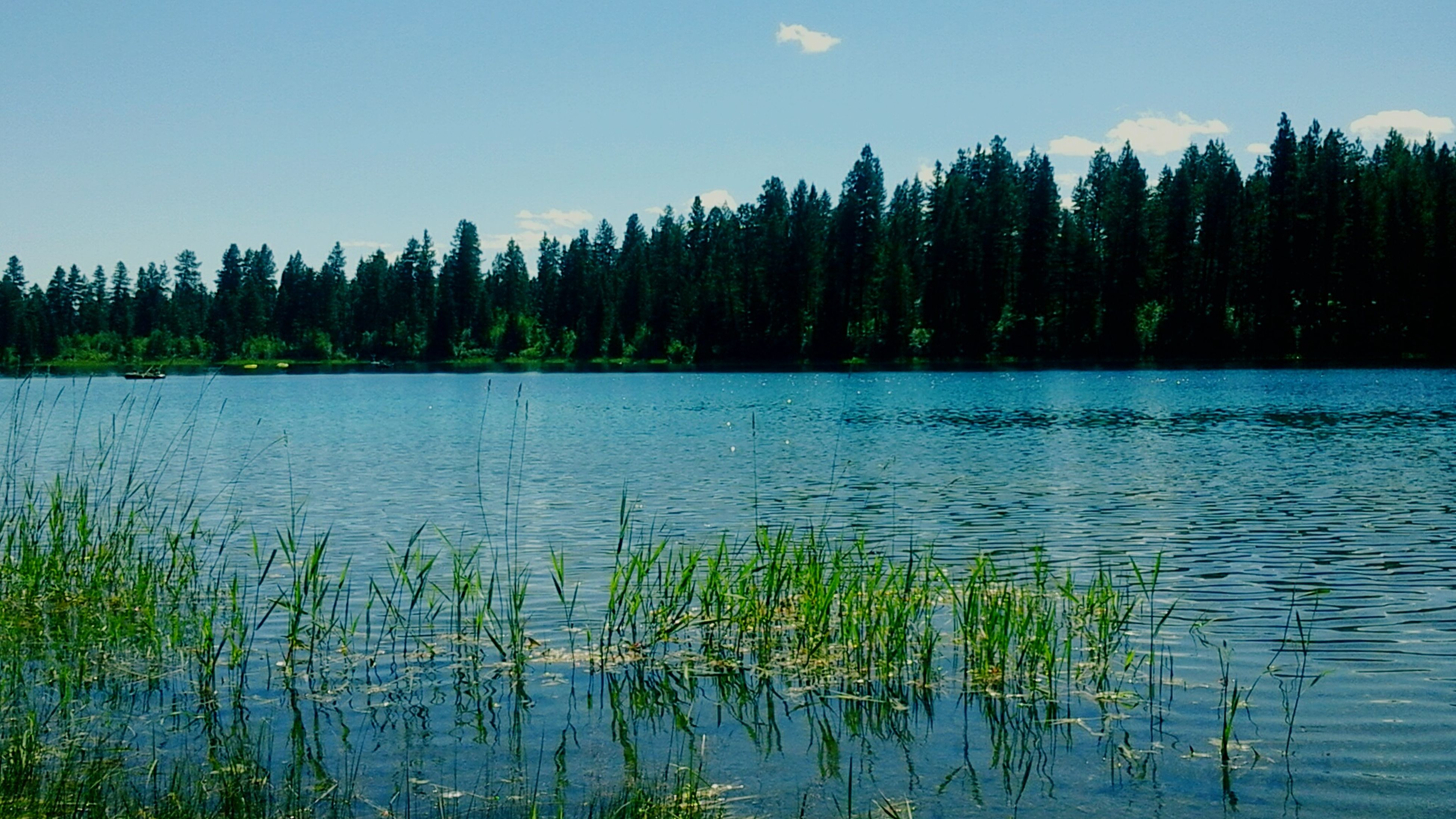 water, tranquil scene, tranquility, lake, blue, reflection, scenics, beauty in nature, nature, plant, sky, growth, idyllic, grass, calm, day, outdoors, no people, rippled, non-urban scene, non urban scene, lakeshore, standing water, remote, majestic, landscape, growing, green color, green