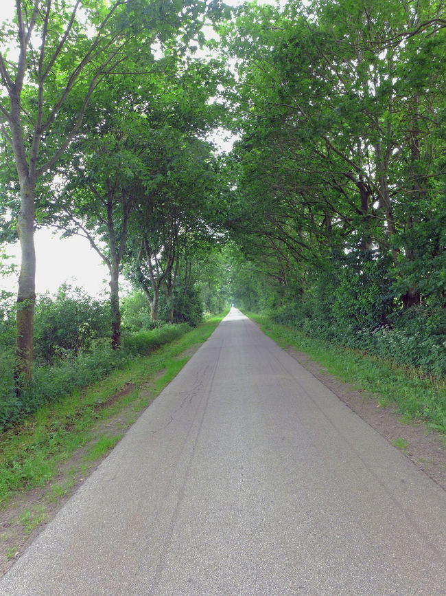 Alley Asphalt Grass Green Color Landscape Nature Road Scenics The Way Forward Tranquil Scene Tranquility Tree