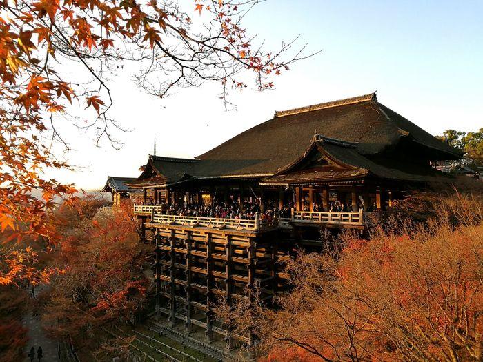 Kiyomizudera Temple, Kyoto Built Structure Architecture Nature Beauty In Nature Outdoors Building Exterior Travel Destinations Japan Kyoto, Japan Kiyomizu-dera