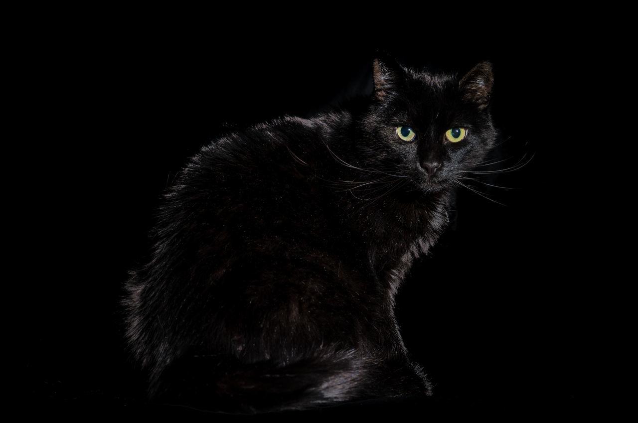 Beautiful stock photos of halloween, Animal Themes, Black Background, Black Color, Cat