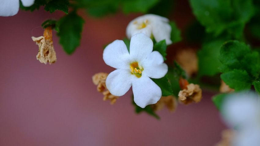 Flower Nature Plant Close-up Flower Head No People Beauty In Nature Fragility Freshness