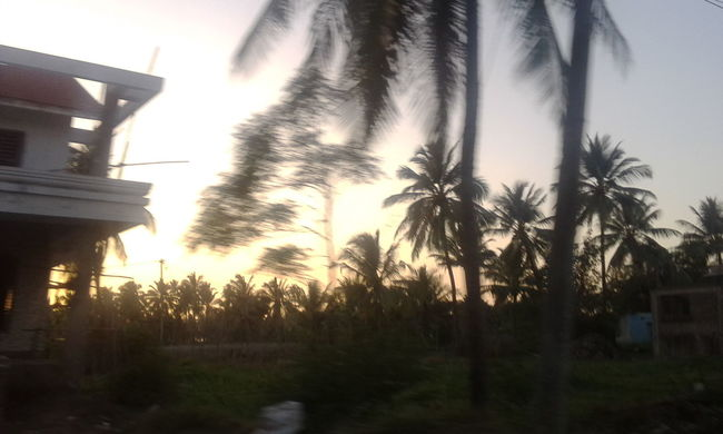Clicked by me in a moving car Moving Fast BREEZY Sunset #sun #clouds #skylovers #sky #nature #beautifulinnature #naturalbeauty #photography #landscape Potrait_photography Sunset Awesome_nature_shots Treeporn# Landscape #sky #horizon #cloudporn Light And Shadow Sunraysthroughthetrees Sunraysthrubranches<3 Streetphotography Amazing View Randomhouse Trees And Sky Tree_collection  Scenery Perfect Timing Vibrant Colors Nature Photography Sky And Trees Awesome_captures by AwesomeAisha in India Maharashtra Greenery