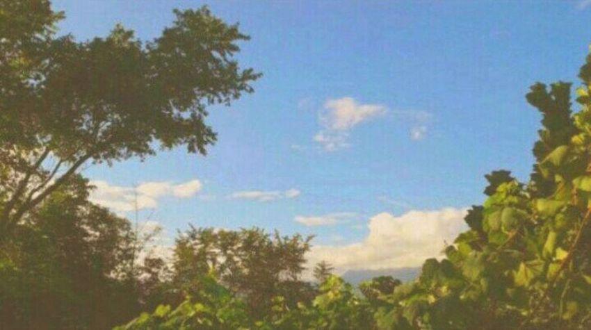 Nature Photography EyeEm Best Edits EyeEm Nature Lover Beautiful Day EyeEmBestPics Sky