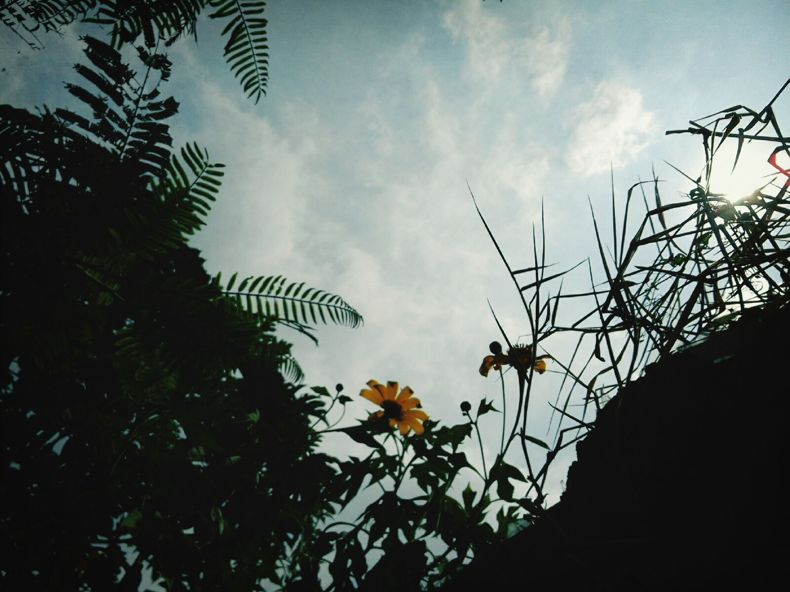 low angle view, sky, growth, plant, leaf, nature, cloud - sky, flower, silhouette, cloud, fragility, outdoors, no people, beauty in nature, day, close-up, stem, sunlight, focus on foreground, cloudy