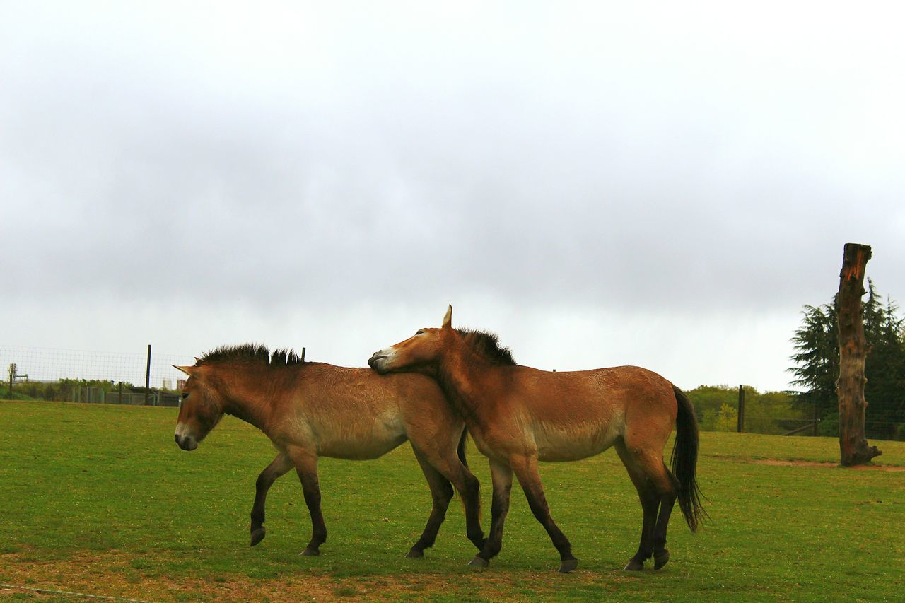 Animals In The Wild Cloud - Sky Animal Wildlife Animal Themes No People Nature Outdoors Power In Nature Day Hugs & Love  Horse Horselove Horse Photography  Beautiful Picture Time
