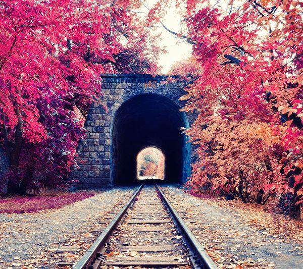 Train cave redtree