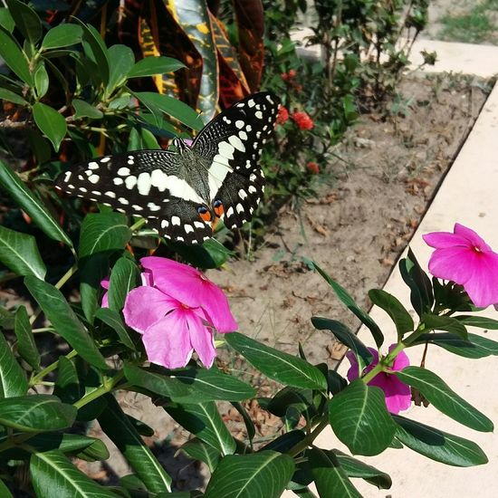 Flower Outdoors Close-up Plant Johnnelson Life As I See It Vientiane, Laos Plant Butterfly