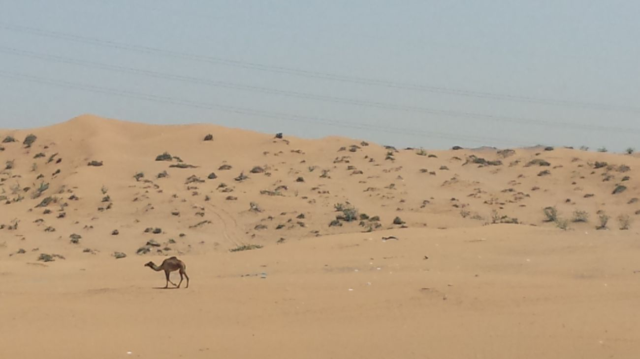 desert scene on way to RAK