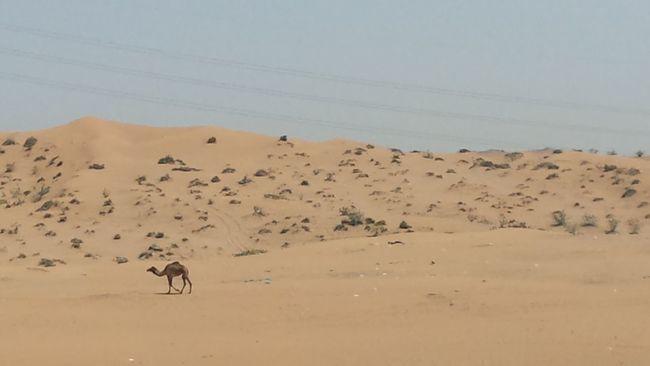 desert scene on way to RAK
