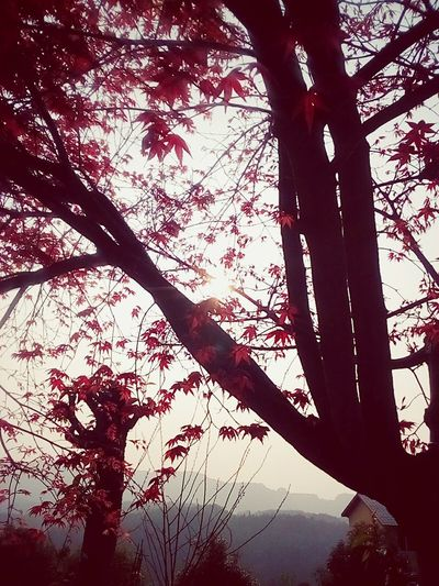 The red of sun and plant. No People Tree Sky Plant