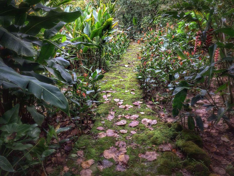 Beautiful stock photos of costa rica, Costa Rica, Day, Dry, Garden