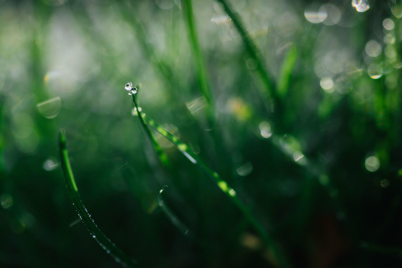 Beauty In Nature Drop Droplet Drops Flare Focus On Foreground Fragility Glare Grass Grass Grassland Haze Nature Nature No People Outdoors Plant Sunlight Water Water Reflections Wet