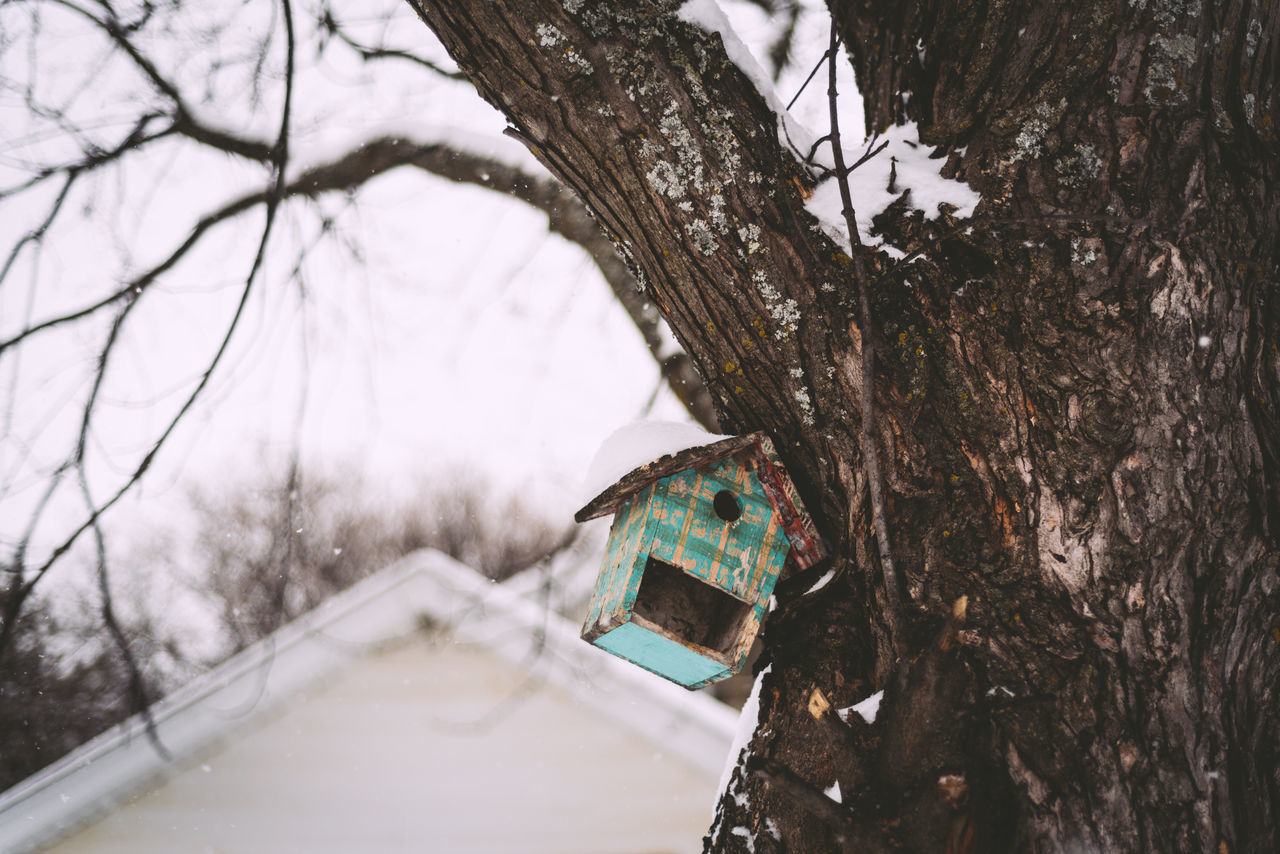 Bare Tree Beauty In Nature Birdhouse Branch Cold Temperature Day Nature Outdoors Snow Tree Tree Trunk Weather Winter