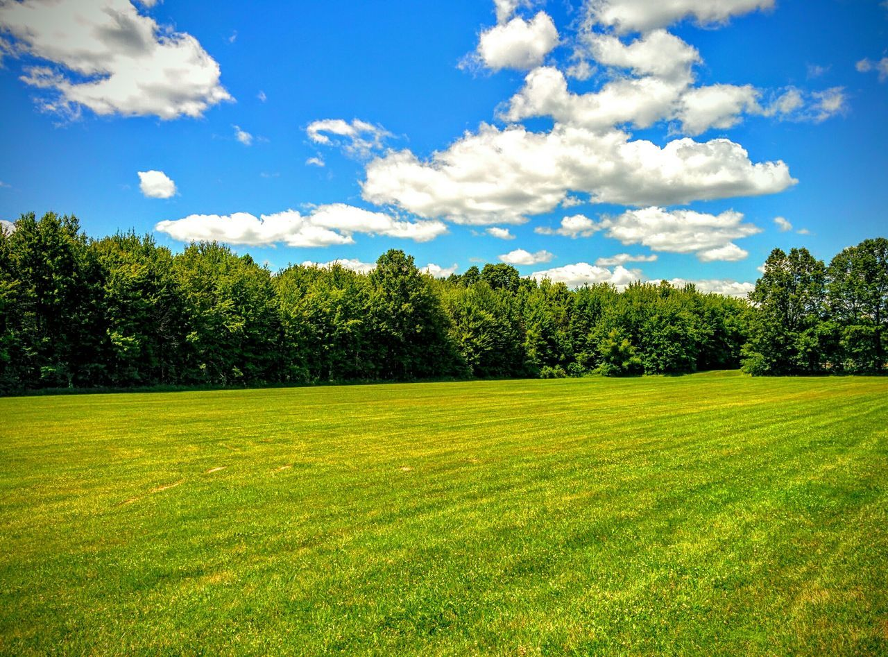 Summer First Eyeem Photo My Year My View Nature Summer Field Fields Sunny Sunnyday Sunny Day Sunny☀ Sunny Afternoon