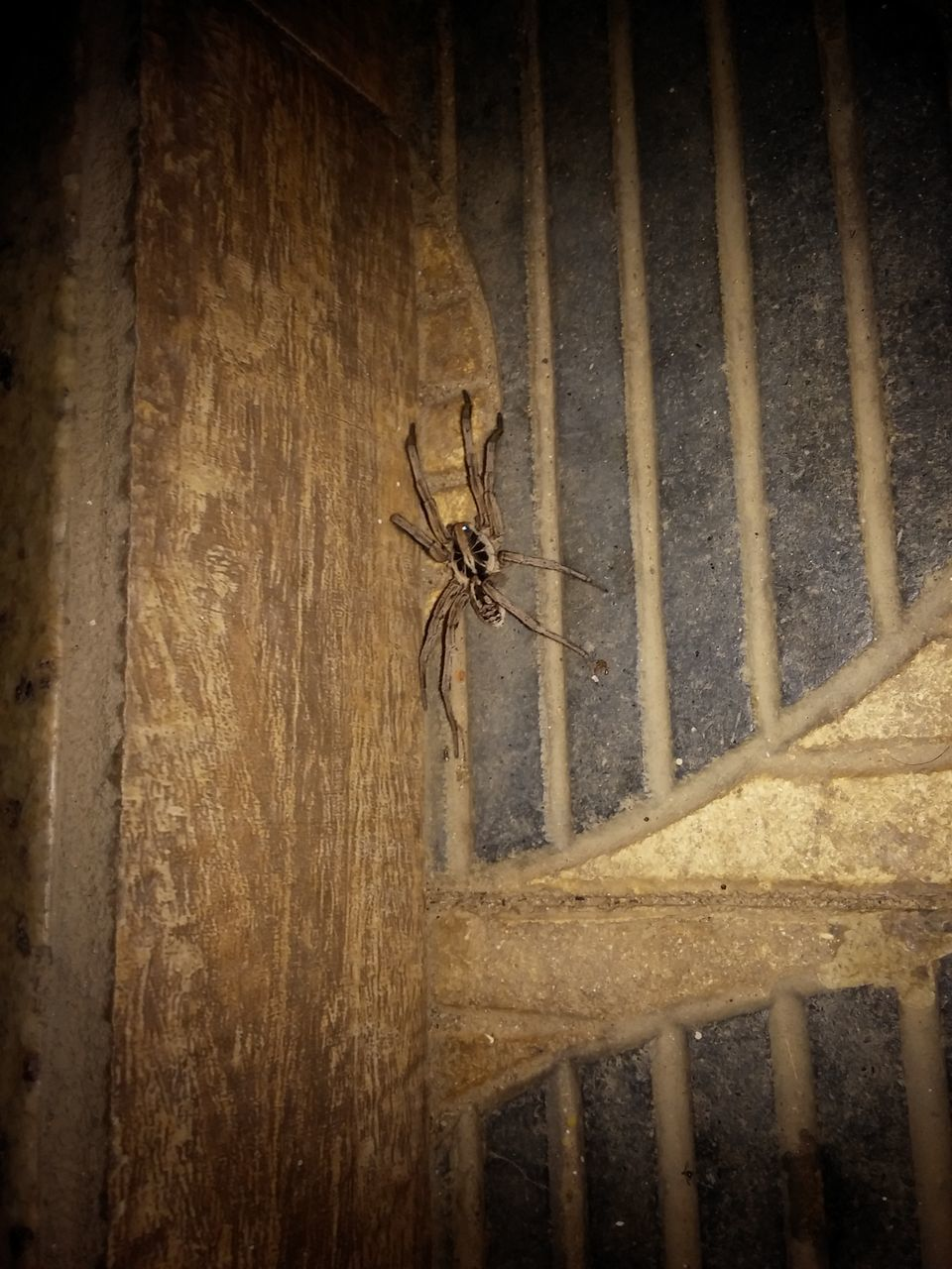animal themes, animals in the wild, one animal, insect, animal wildlife, wood - material, no people, day, close-up, outdoors, nature