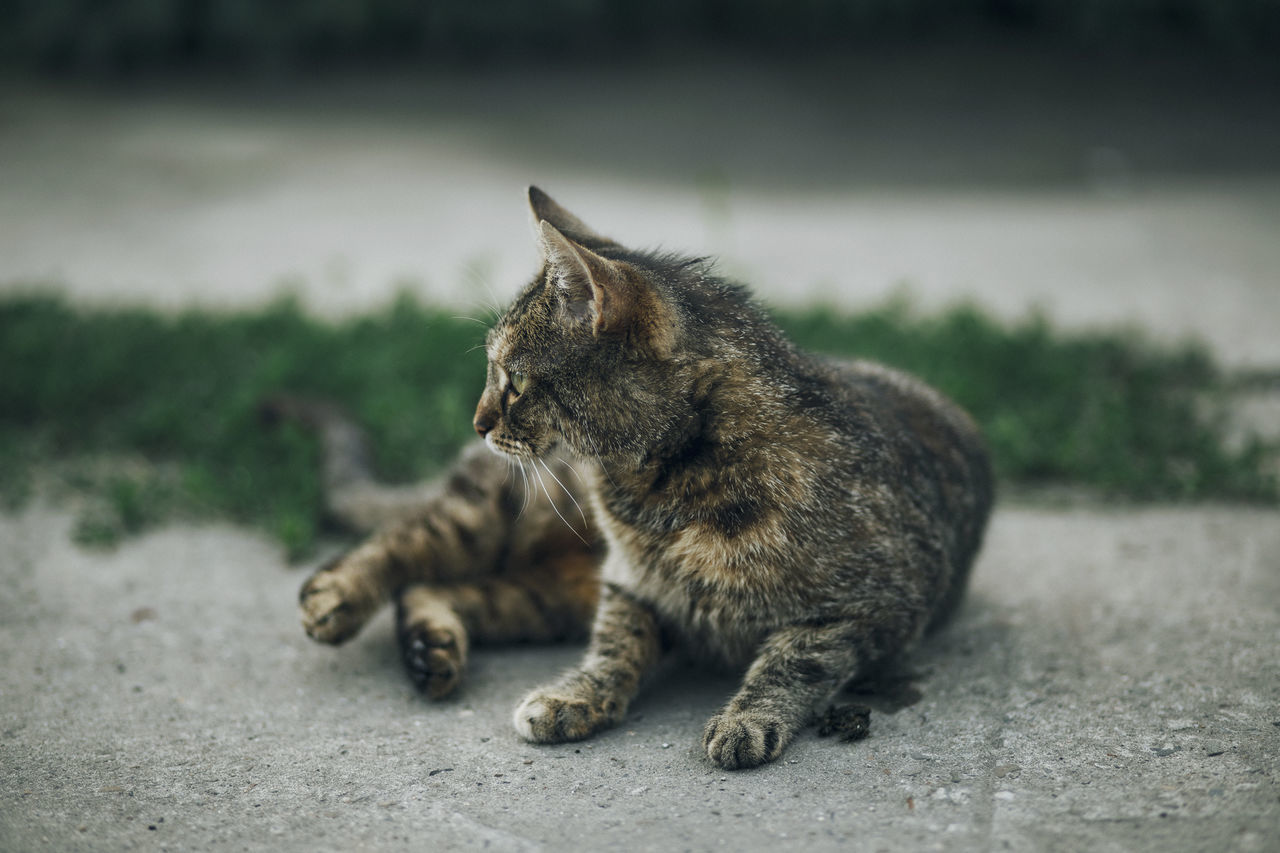 Lazy Sunday in Mielec, Poland. Animal Themes Close-up Day Domestic Animals Domestic Cat Feline Focus On Foreground Mammal No People One Animal Outdoors Pets Sitting