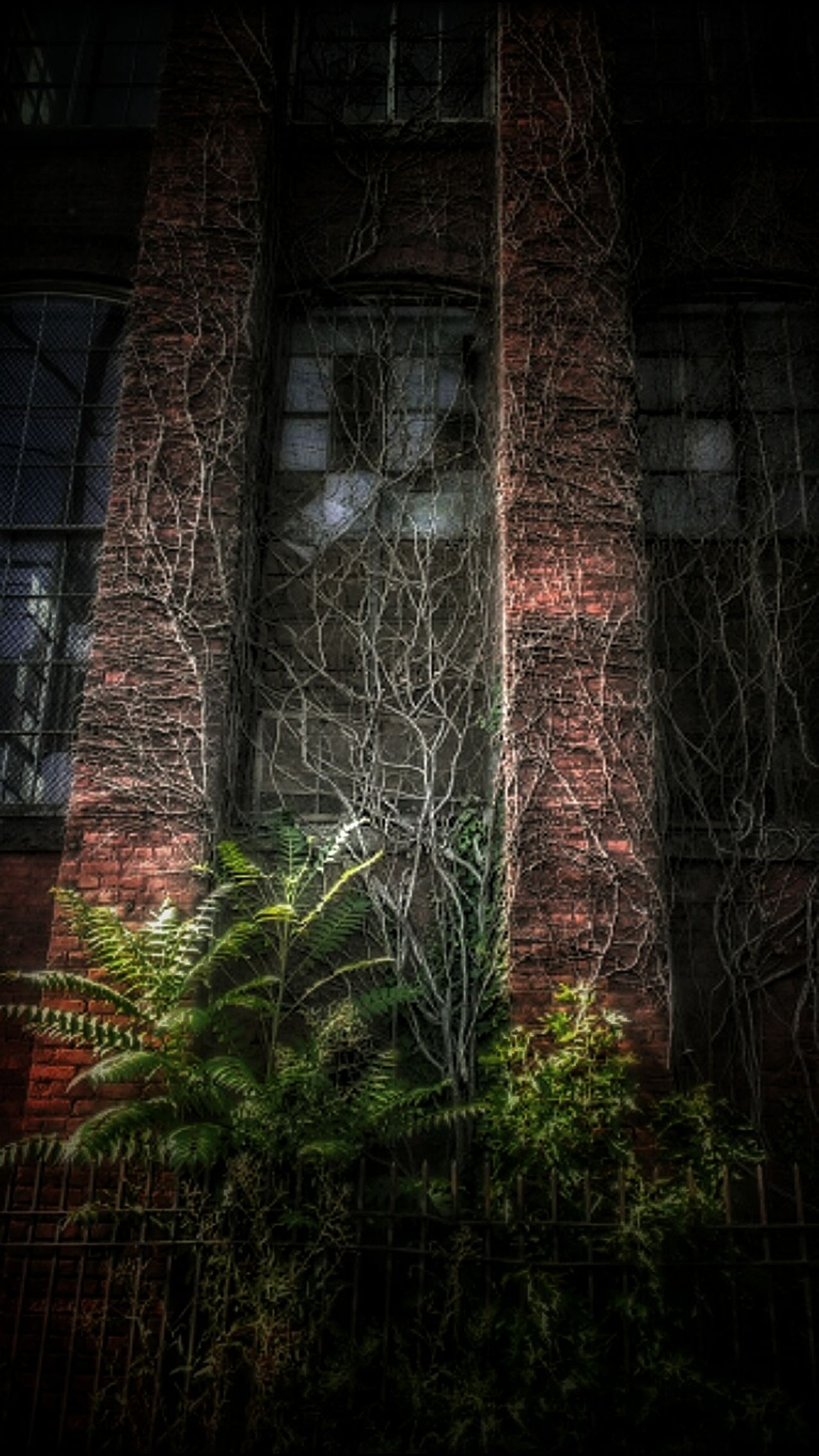 Escape From Arkham... Built Structure Building Exterior Window Creepy Houses AMPt - Abandon Abandoned Buildings Architecture Abandoned AMPt - Street Abandoned & Derelict Weathered AMPt - My Perspective EyeEm Gallery Historic Building Bad Condition Deterioration Nature Taking Over Vines On Wall Creepy Building Windows Ivy Night EyeEm_abandonment