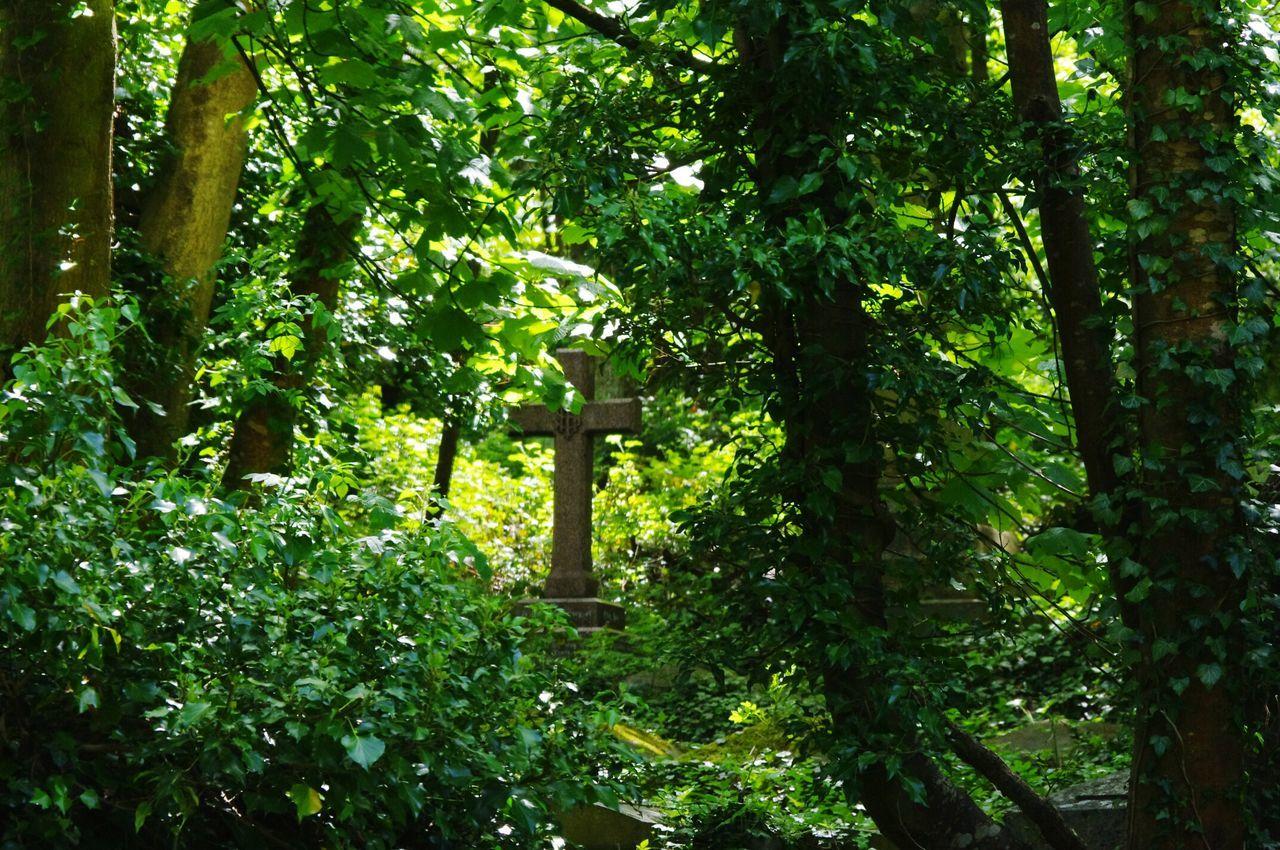 Walking Around The Cemetery Bristol Uk Relaxing Taking Photos Nature Yeah Springtime! Rundown Cemetery Nature On Your Doorstep
