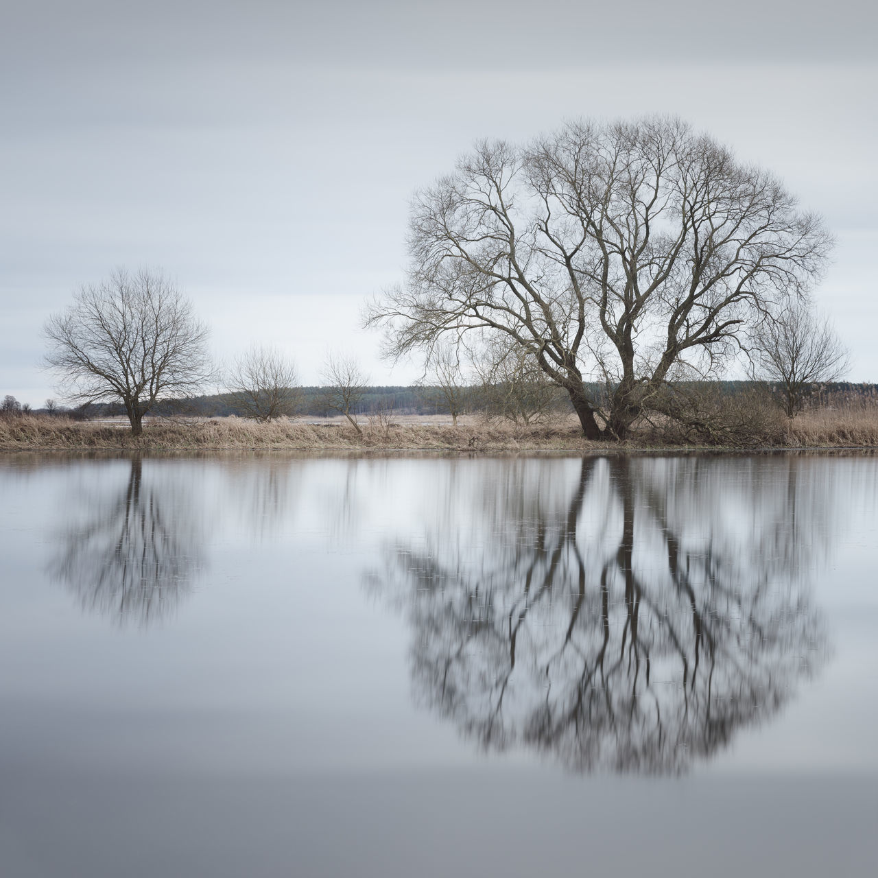 barren tree reflection Bare Tree Barren Landscape Beauty In Nature Branch Brandenburg Cloud - Sky Day Fineart Germany Havelland Lake Lone Long Exposure Muted Colors Nature No People Outdoors Philipp Dase Reflection Scenics Sky Tranquil Scene Tranquility Tree Water