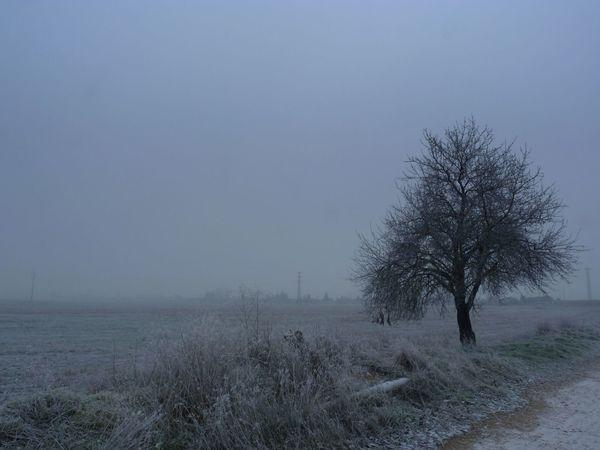 Día de niebla 01 Day Fog Fog Day Frosty Mornings Landscape Nature No People Outdoors Single Tree Tree