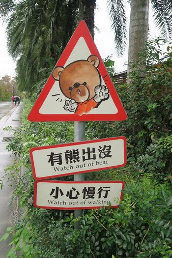 Watch Out! Bear Running Wild LOL!
